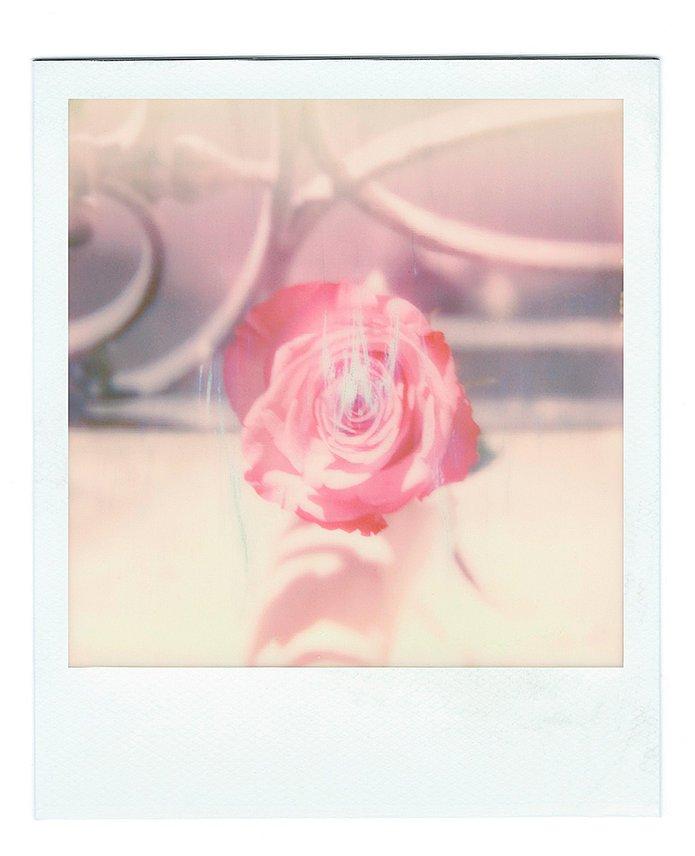 Rose intérieure 3