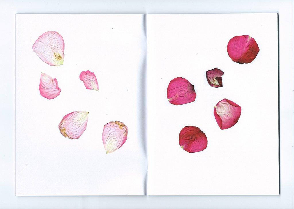 Prologue Rose Intérieure